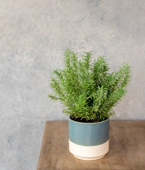 Faux Rosemary Plant in Teal and Beige Pot