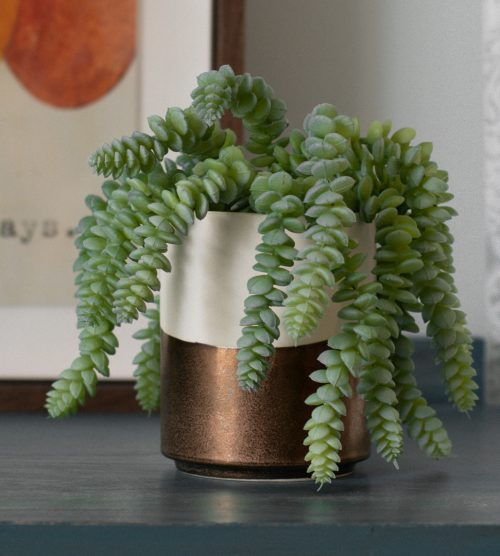 Faux Donkey Tail Succulent