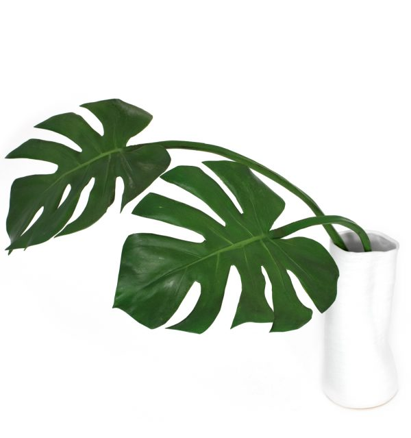 Two faux monstera leaves in modern white vase on white background